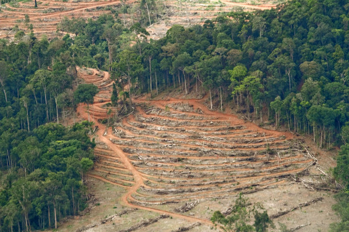 Deforestation near Ketapang