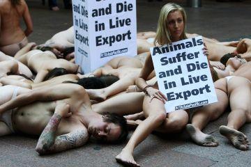 Australians Protest Against Live Cattle Exports