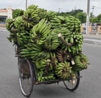 Bananas travel by pedicab