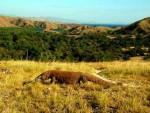 Komodo Prehistoric Animal