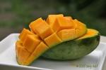 Mangga/Mango Harum Manis