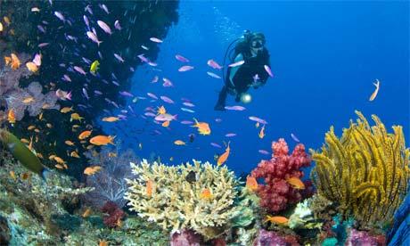 Pulah Weh diving